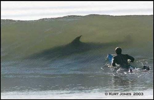 shark%20and%20surfer.JPG