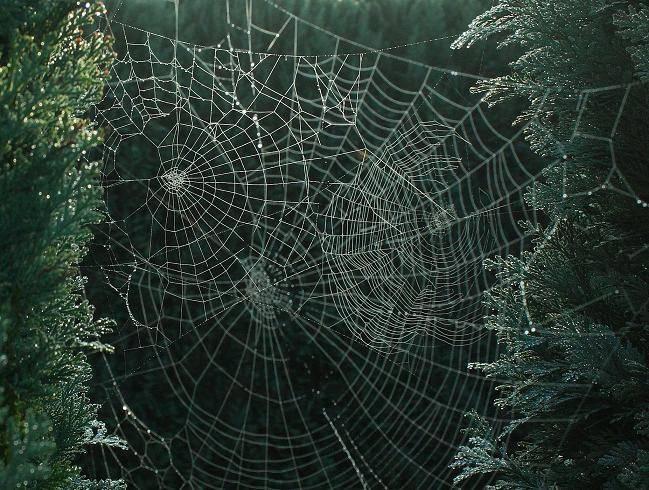 smilewebs.JPG