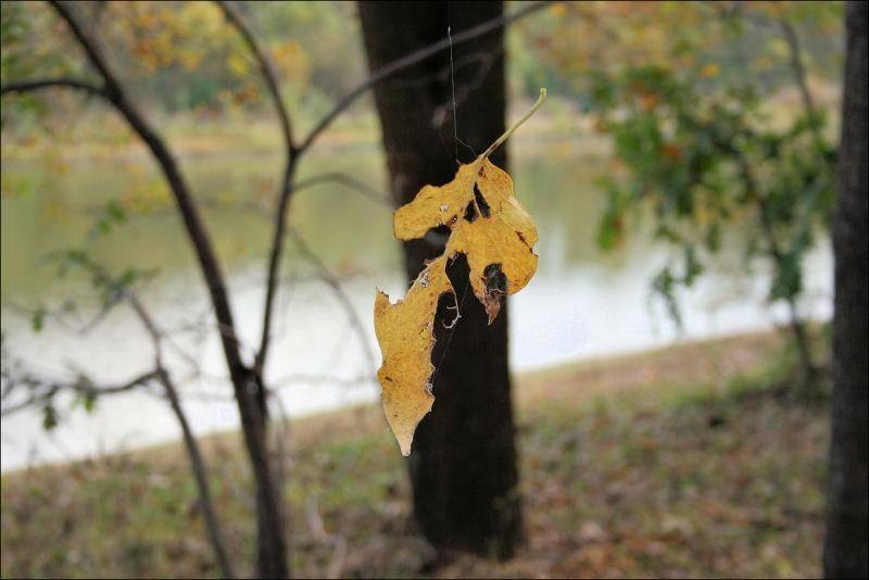 spinning_leaf.jpg