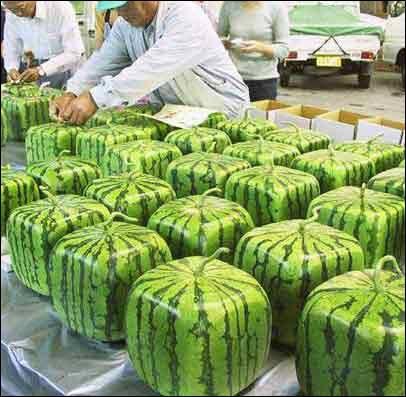 square-watermelon.jpg