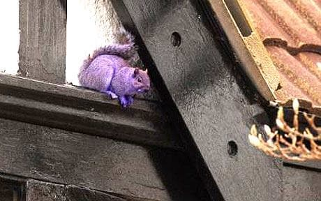 squirrel_1210083c.jpg