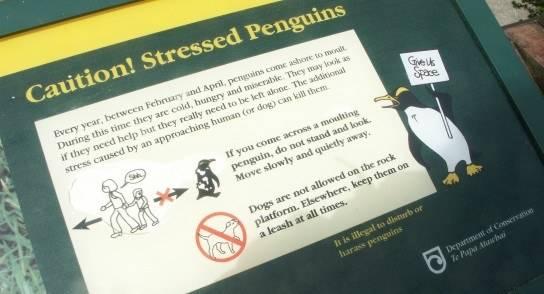 stressed-penguins.jpg