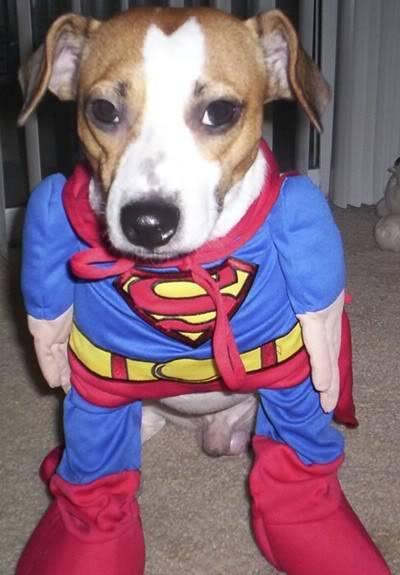 super-dog.jpg