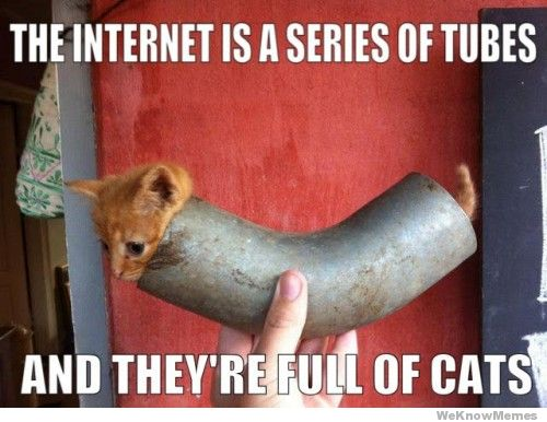 the-internet-is-a-series-of-tubes-and-theyre-full-of-cats.jpg