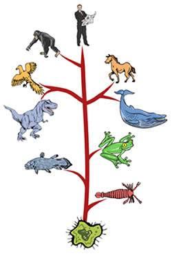 tree-o-life.jpg