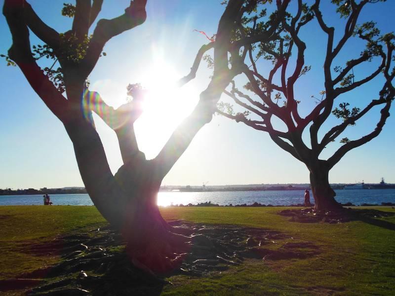 Tree Sender.jpg