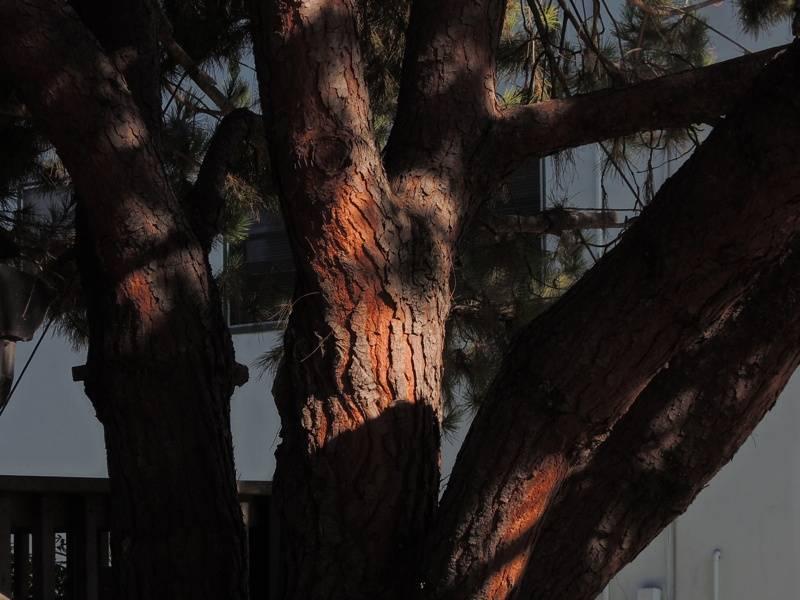 tree_zpsd0a9d1b1.jpg