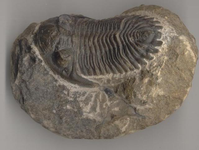 trilobite-1.jpg
