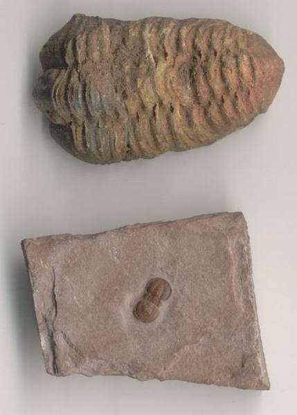 trilobites.jpg