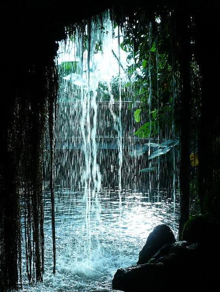 tropical-fall.JPG