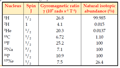 Magnetisation ratio in human body using gyromagnetic ratios