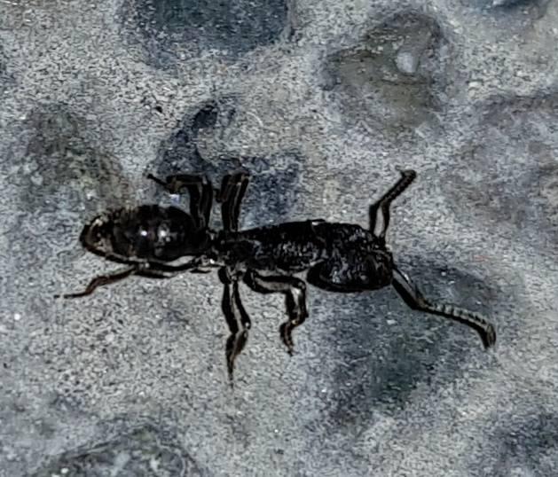 what_ant2.jpg