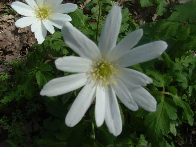 Whitewildflower.jpg
