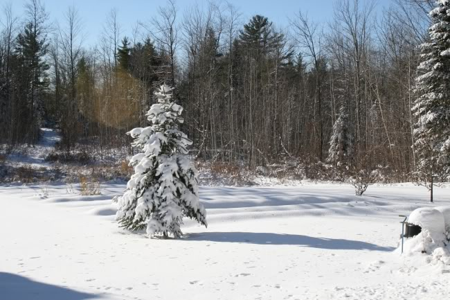wintergarden.jpg