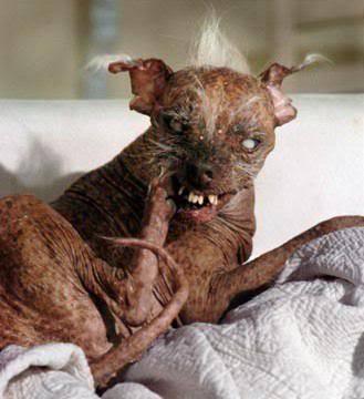 worlds-ugliest-dog.jpg