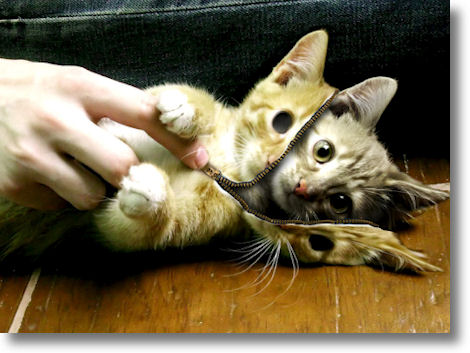 zipper_cat.jpg