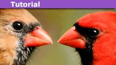 cardinalnumbers
