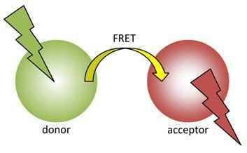 Diagram of how FRET works