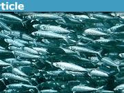 fishresearch